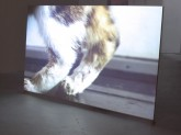 "Bea Mc Mahon Cats HD Video, colour, stereo and sound 13' 59"" 2011"